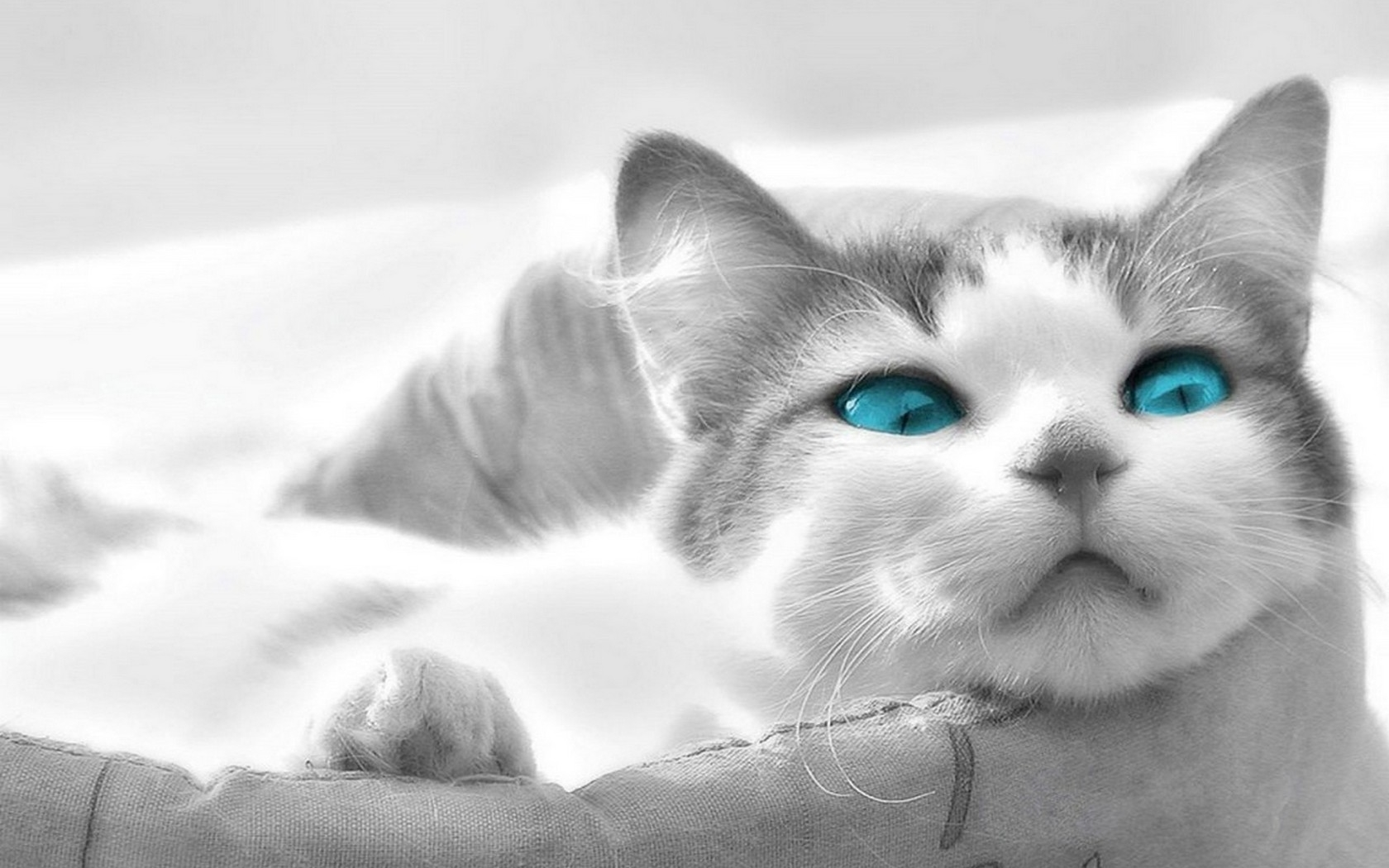 10 imagenes de gatitos para fondo de pantalla for Wallpapers animados hd